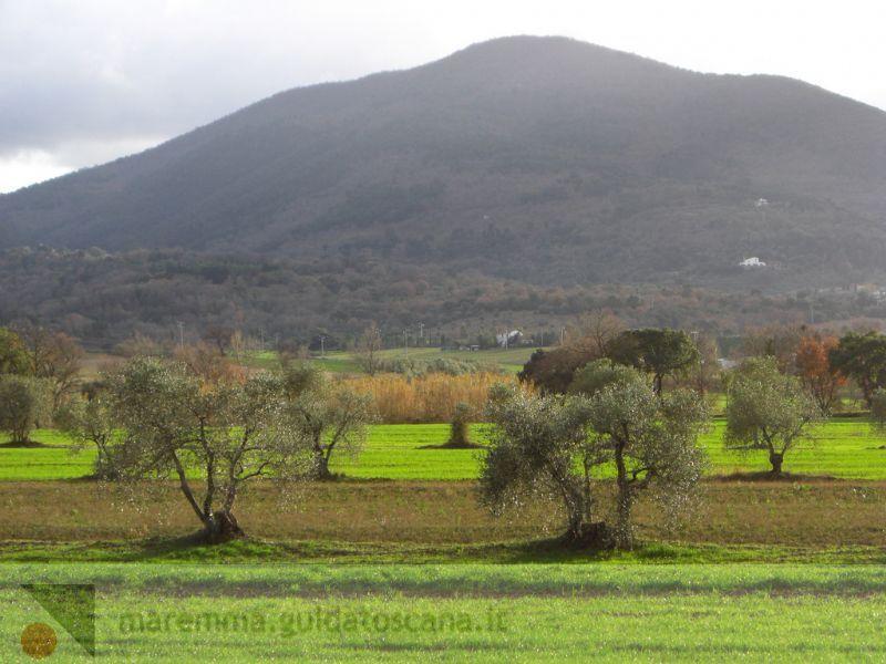 Monti in Maremma